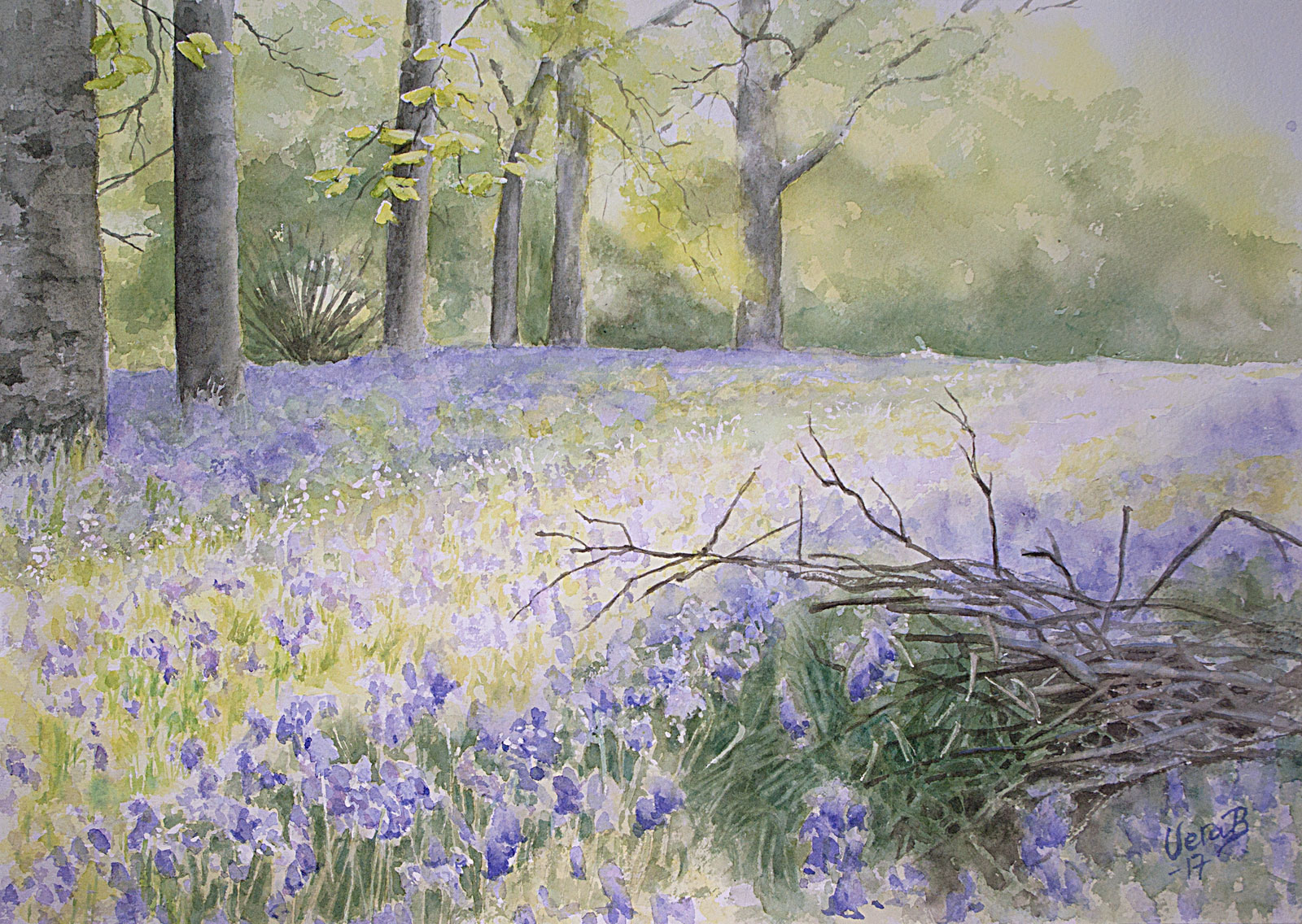 """Bluebell forest. In InArteFabriano, Italy exh. 2018. 35x50 cm (14x20"""") on Arches fine 300gsm 2017. 480€"""