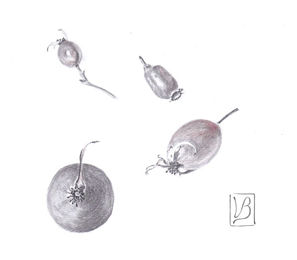 A study of rose hips.