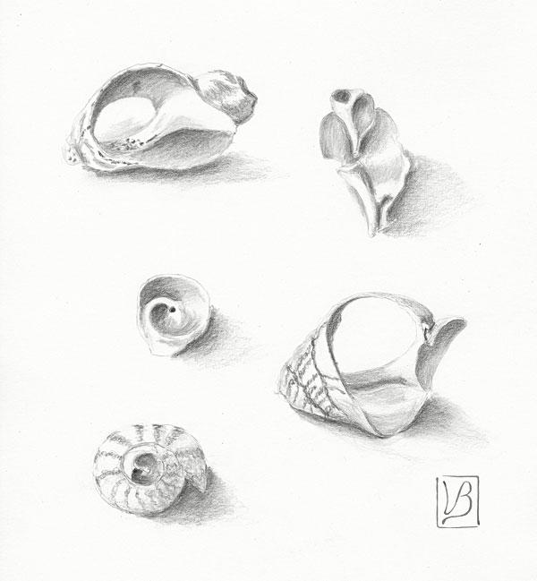 A study of shells.