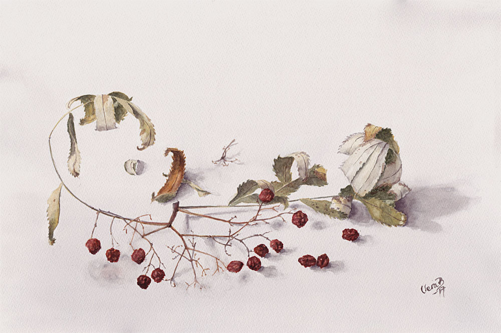 "A dry rowan twig. 35x53 cm (14x21,2"") on Bockingford 300gsm 2017. 470€"