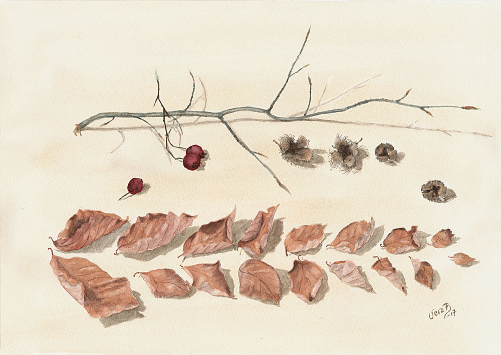 "Beech and hawthorn. 35x50 cm (20x14"") on Bockingford 300gsm 2017. 470€"
