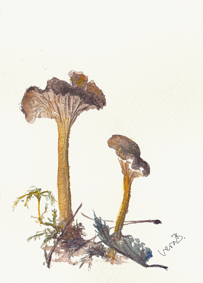 "Funnel chanterelles, pure plant pigment. 19x14 cm (7,6x5,6"") on Bockingford 300gsm 2017."