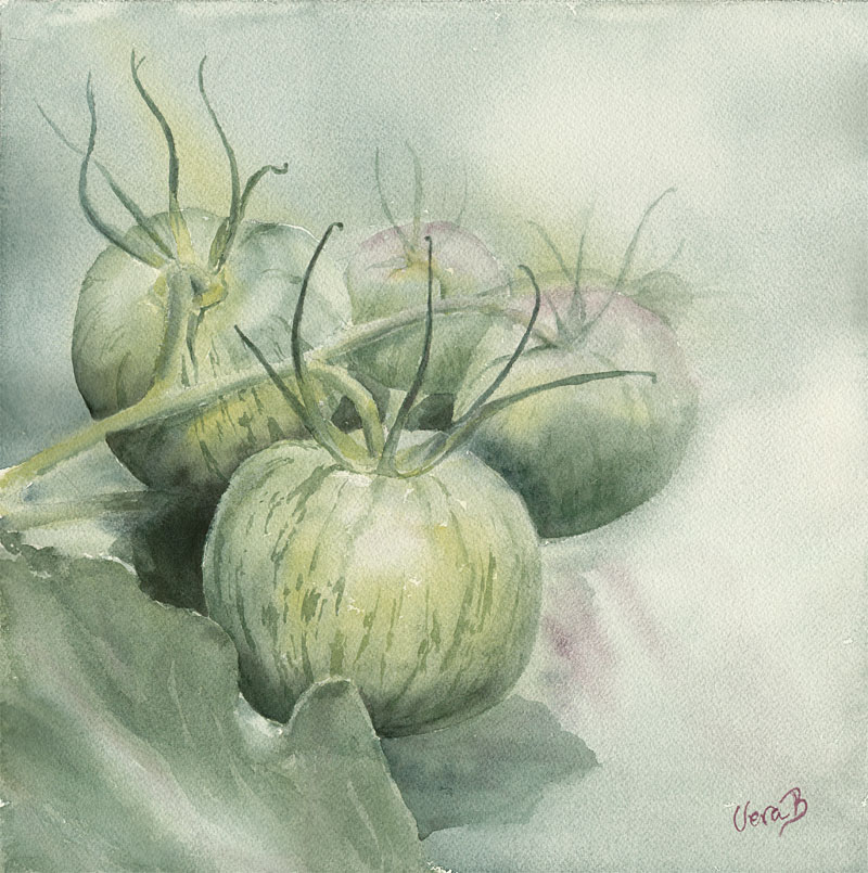 "Green zebra tomatoes. Pure plant pigment. 32x32 cm (12,8x12,8"") on Arches Not 300gsm 2016. Available as print."