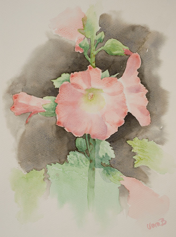 Hollyhock, light pink. 30x22 cm 2015 SOLD