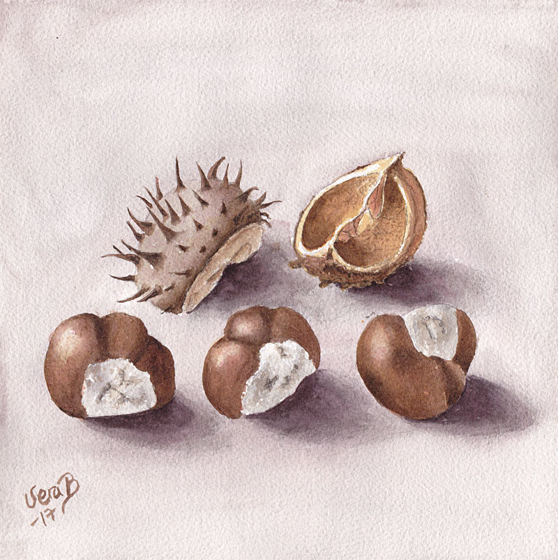 "Horse chestnuts. 25x25 cm (10x10"") on Arches rough 300gsm 2017. 168€"