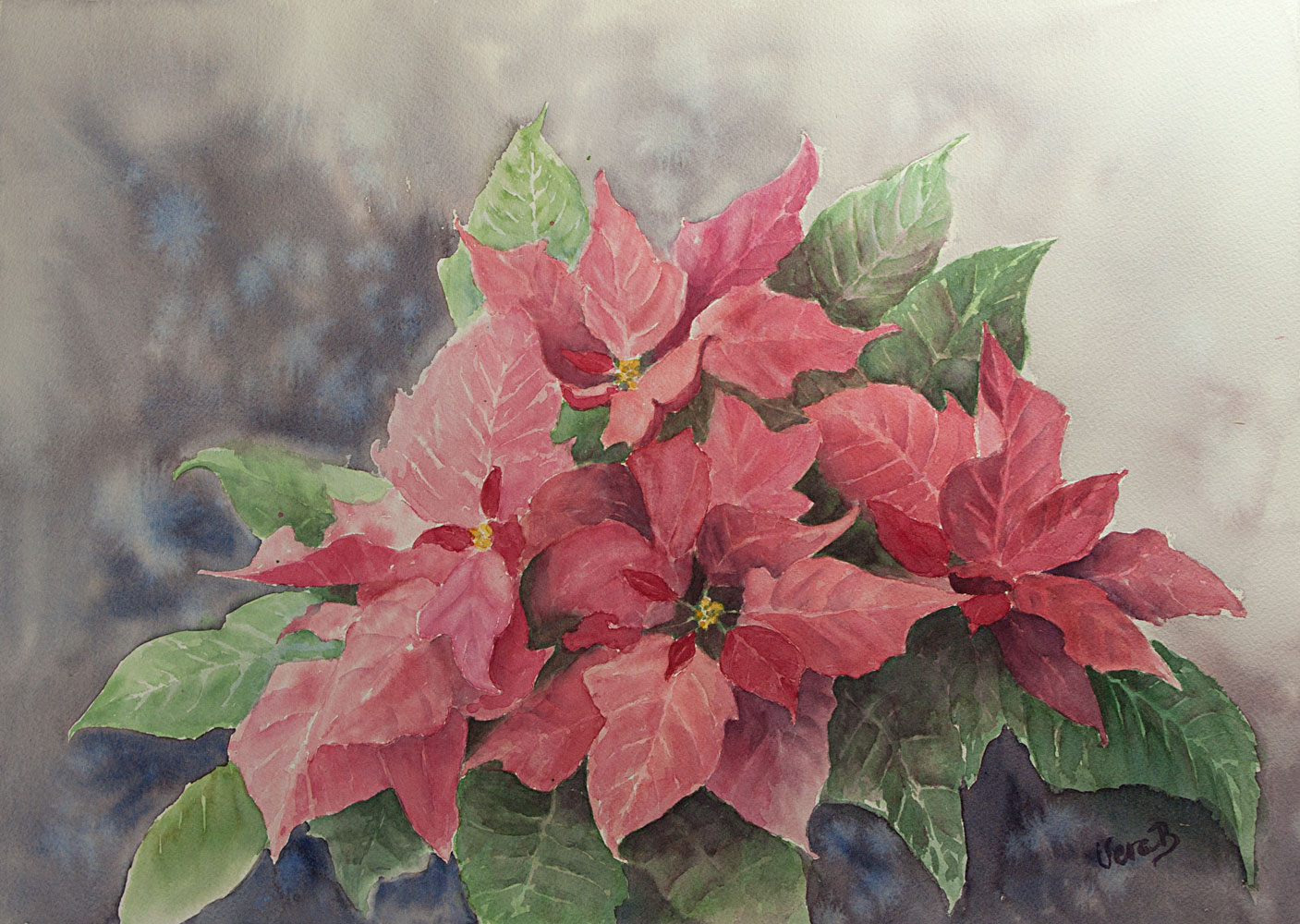 "Poinsettias. 35x50 cm (14x20"") on Arches rough 300gsm 2016. 470€"