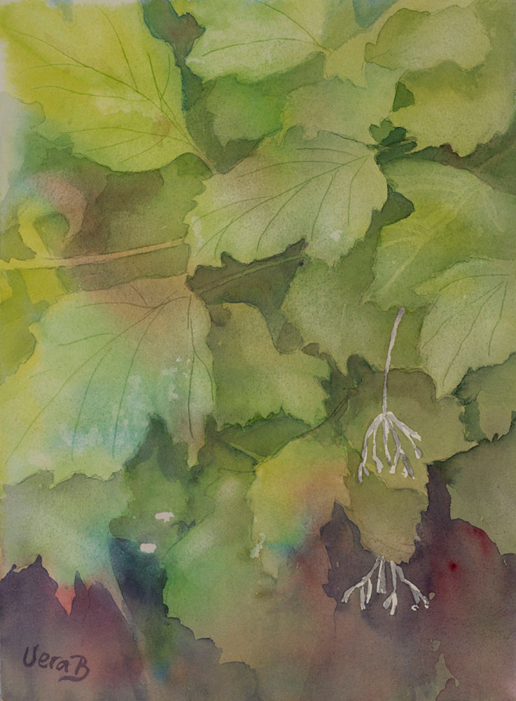 "Viburnum leaves. 30x22 cm (12x8,8"") on Arches Not 300gsm 2015. 175€"
