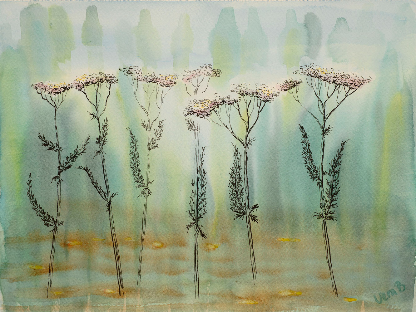 Yarrow. 22x30 cm on Sennelier 300gsm 2015. SOLD