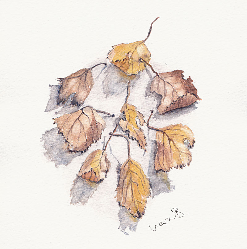 "Dry birch leaves, in the shape of a birch leaf. Pure plant pigment watercolour. 15x15 cm (6x6"") on Bockingford paper 2017."