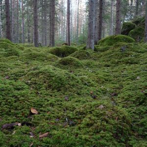 Mossy forest floor.