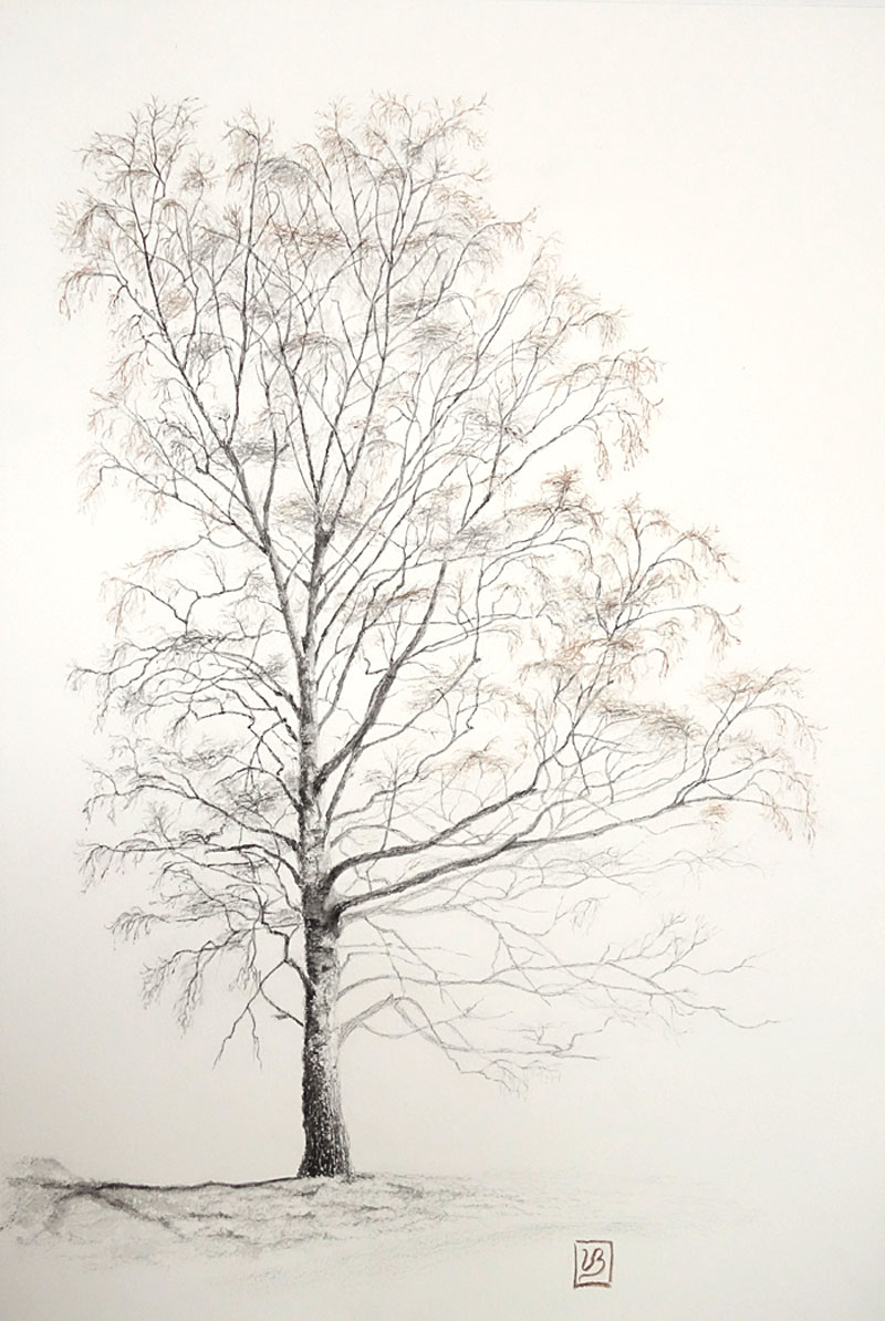 "A birch portrait. Graphite drawing and plant pigment watercolour on Bockingford paper, 56x38 cm (22,4x15,2"") 2018. 470€"
