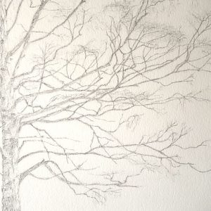 A birch portrait, work in progress, the finished graphite drawing, detail.